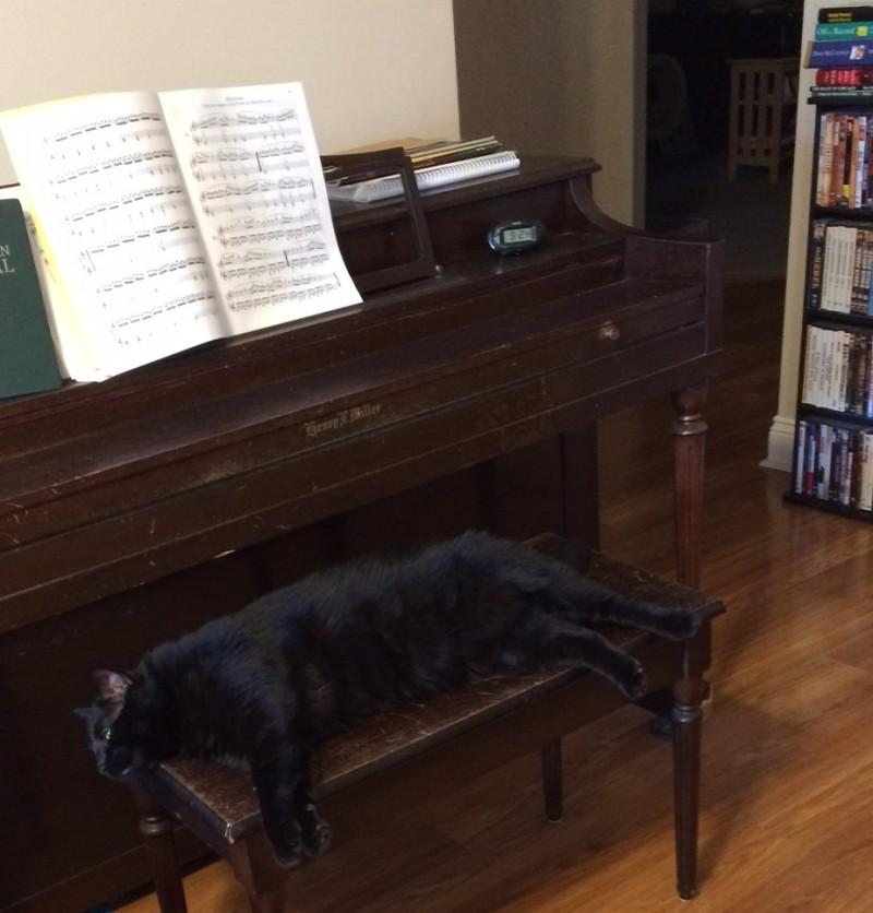 Big Al on piano bench