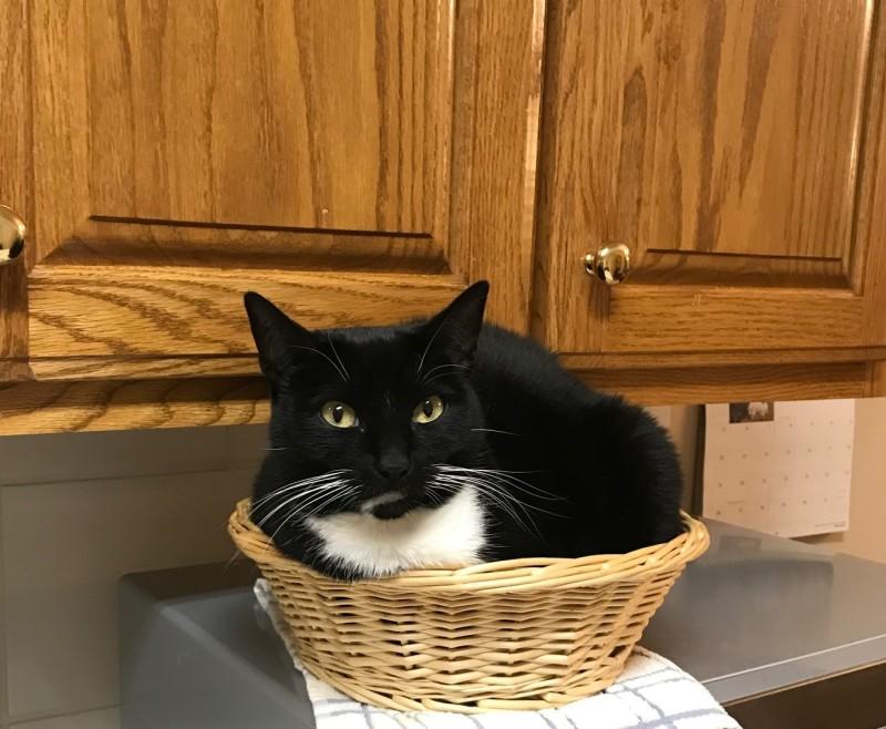 catbasket